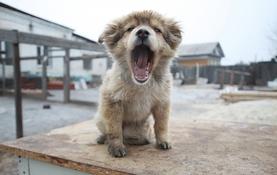 Пожертвование в приют для животных
